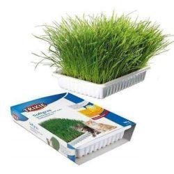 Trixie 4232 macskafű bio grass 100g dobozos