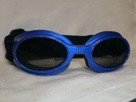 Camon kutyanapszemüveg