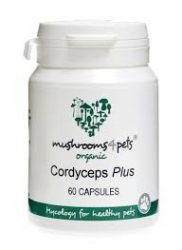 Cordyceps Plus (500mg) 60kapszula