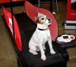 Futópad dogPacer 25 kg-os testsúlyig